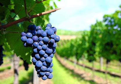 Large grape